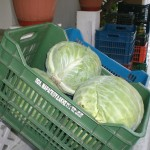 greek-cabbage-crates