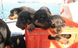 crate_puppies